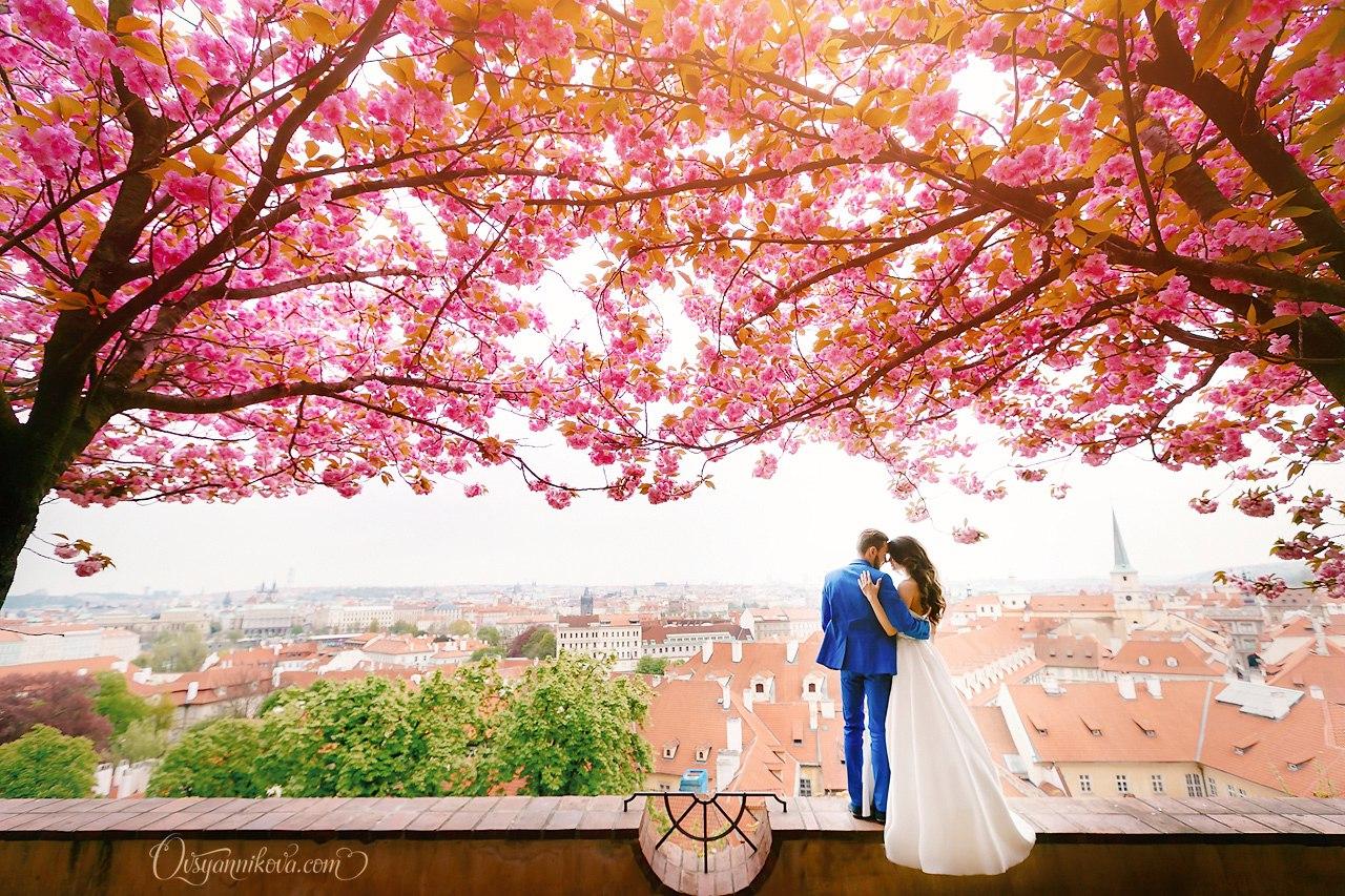 свадебный видеооператор на свадьбу в Праге